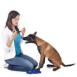 Frau legt Junghund ein Halsband an