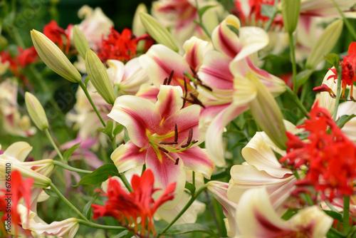 canvas print picture Garten 225
