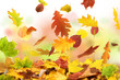 canvas print picture - Herbst 50