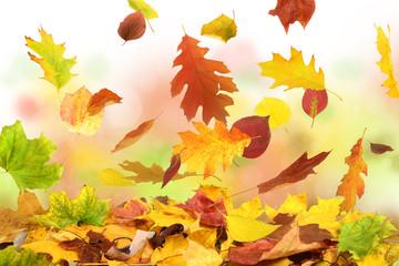 Herbst 50