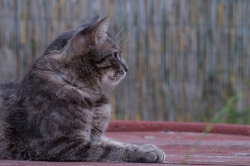 Cat staring into the distance