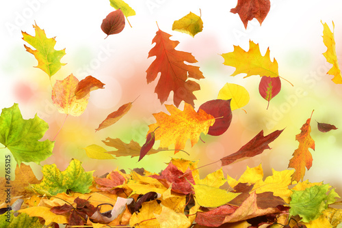 canvas print picture Herbst 50