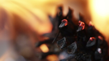 Burning pine cone