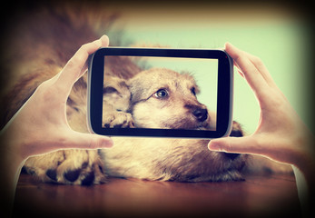 Photo Puppy on tablet