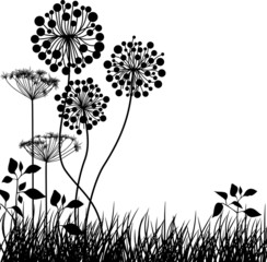 Meadow plants