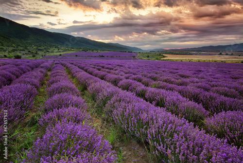 oszalamiajaco-krajobraz-z-lawendowym-polem-przy-switem