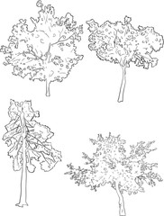 four tree sketches isolated on white