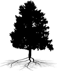 fir tree with black root silhouette
