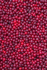 Farmers market sour cherry background
