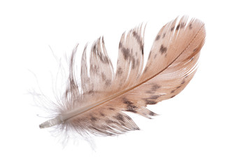 single spotted brown feather on white