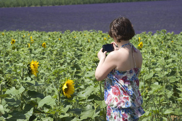 Woman taking photos the sunflowers field