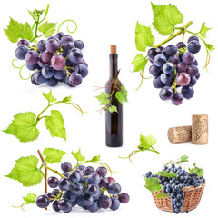 Collection of grapes, bottle and cork, Isolated on white