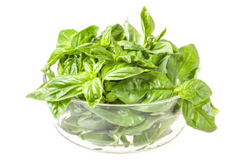 Fresh basil in bowl isolated on white