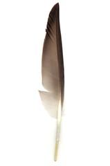 vogelfeder_feather_05