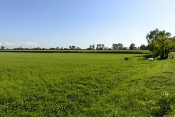 Adda park country landscape near Abbadia Cerreto