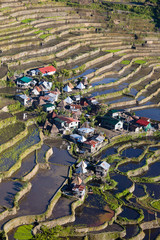 Rice terraces in Batad,  Philippines