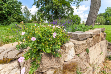 Rock garden with flowers