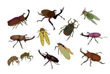 カブトムシやクワガタムシや蝉の昆虫図鑑
