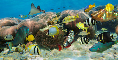 Underwater panorama in a coral reef with fish