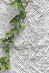white cement texture wall  leaf