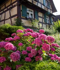 Scwarzwald