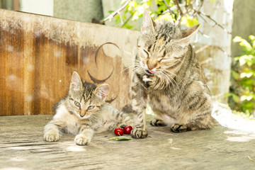 kitten and mother cat on an old wooden table in the garden