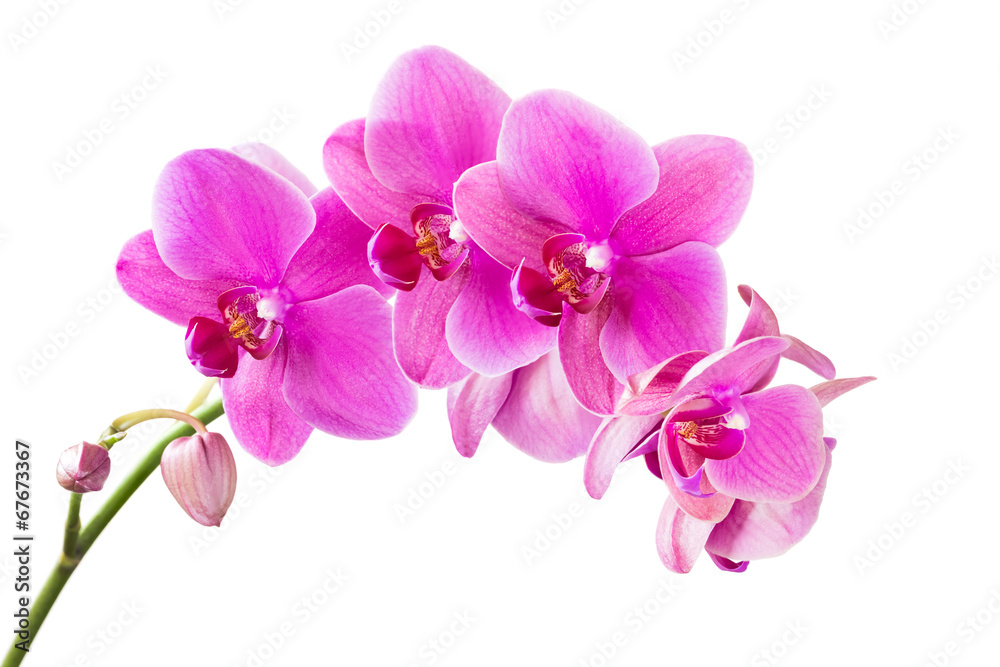 orchid wall sticker wall stickers