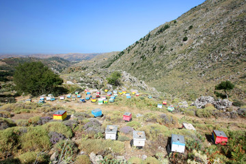 Grèce - ruches en Crète