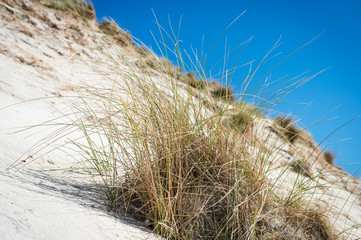white sand dunes, tall grass and blue sky