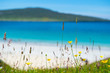 Flowers, white sandy beach, turquoise water in the background - 67676158