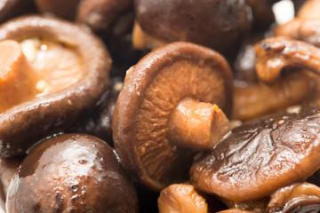 background of shiitake mushrooms