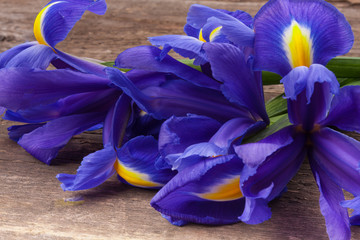 Blueflag or iris flower on grungy wooden background