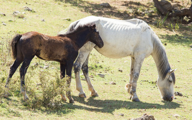 horses in the pasture on the nature