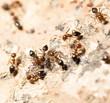 ants on the wall. macro