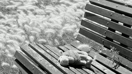 throwing the teddy into the garden bench