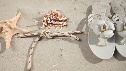 Sunglasses, seashell and starfish on beach. HD with motorized sl