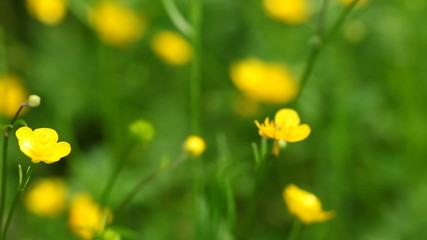 Yellow flowers. Full HD with motorized slider. 1080p.