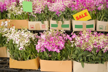 Box of orchid flower are on sale in plant market Thailand