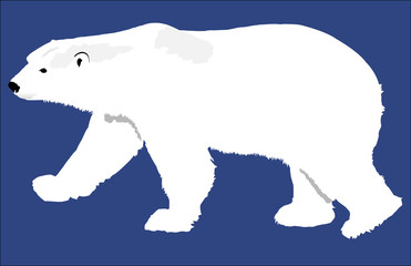 Polar Bear Simple