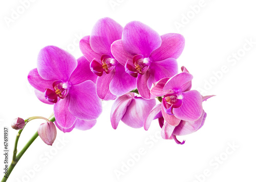canvas print picture Orchid