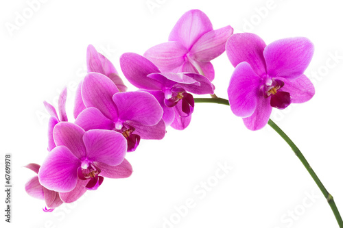 In de dag Orchidee Orchid