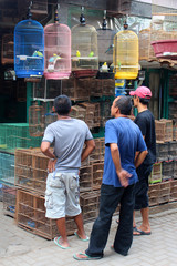 Indonesia / Yogyakarta birds market