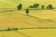 Natural rice field