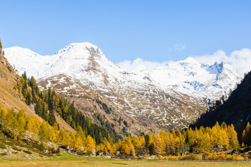 Autumn forest in the alp valley
