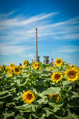 Sunflowers and power station