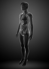 Xray digestive system of male body artwork