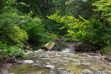 Peaceful forest stream flow down among stones