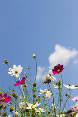 flowers and blue sky background