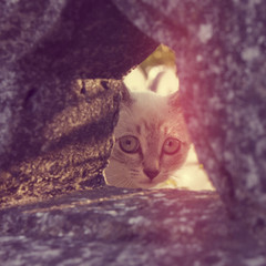 A little cat peeking out of a hole in a stone fence