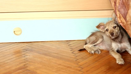 funny puppy lying on a wooden floor